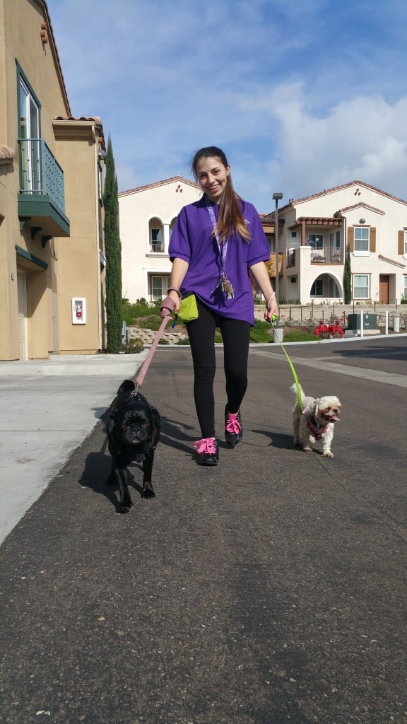Daily Dog Walking