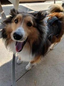 The JenLovesPets team loves those doggie smiles!