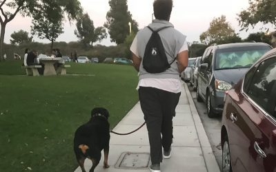 Hiking San Diego trails with your dog- How to be prepared