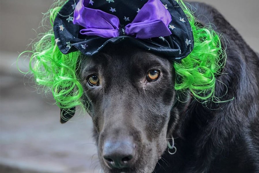 Preparing Your Pet for a Spooktacular and Safe Halloween