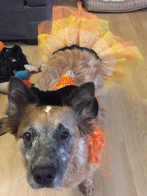 Pet Halloween Safety - San Diego