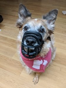 The truth about dog muzzles