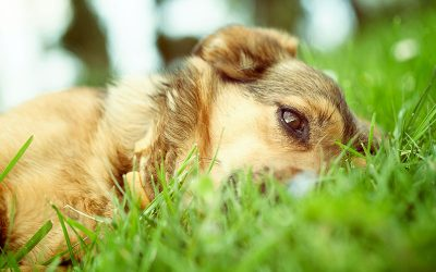 Flea and Tick summer safety for pets