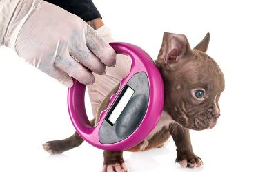 Importance of Microchips