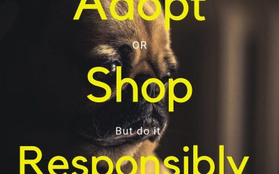 #AdoptOrShop
