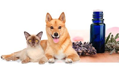 Essential Oils and your Pet: Good vs. Bad