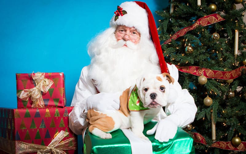 4 Ways to Include Your Pets for the Holidays