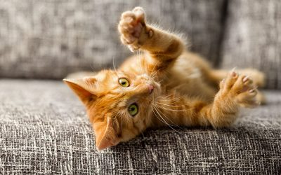 To declaw or not to declaw? That is the question;