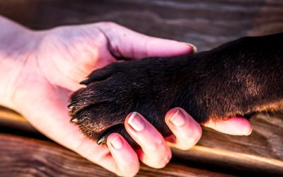 why dogs put their paws on you
