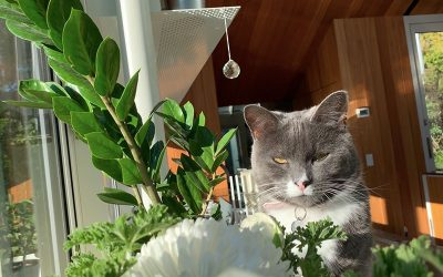 Houseplants: Toxic and Non-toxic to your Pets