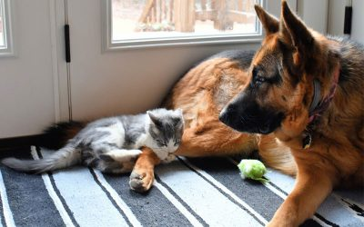 Keeping busy while stuck inside with your pet