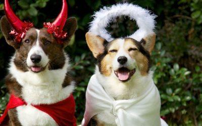 Halloween Pet Safety Tips