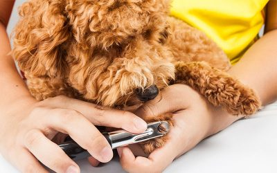 Why it is Important to Keep Pet's Nails Trimmed