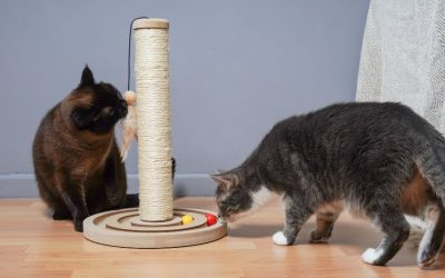 5 Cat Products Every Cat Needs in their Life