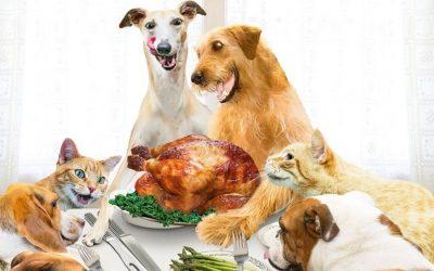 Thanksgiving Pet Safety