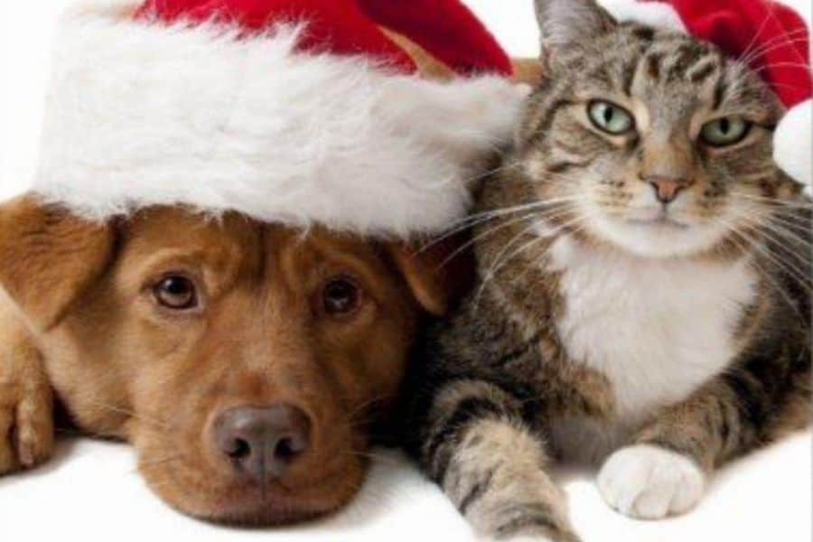 Ways to Celebrate Christmas with Your Pet