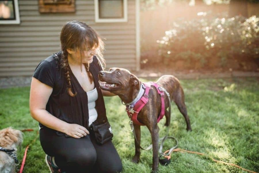 Tay! Dog Trainer Extraordinaire