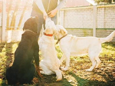 dog training San Diego
