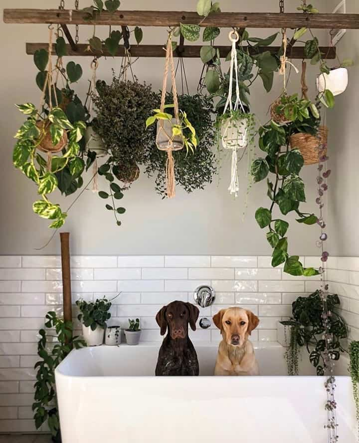 How to Prevent your Pets from Destroying your Houseplants