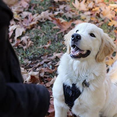Jen Loves Pets - Puppy Classes