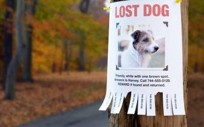 Steps to Find your Lost Pet