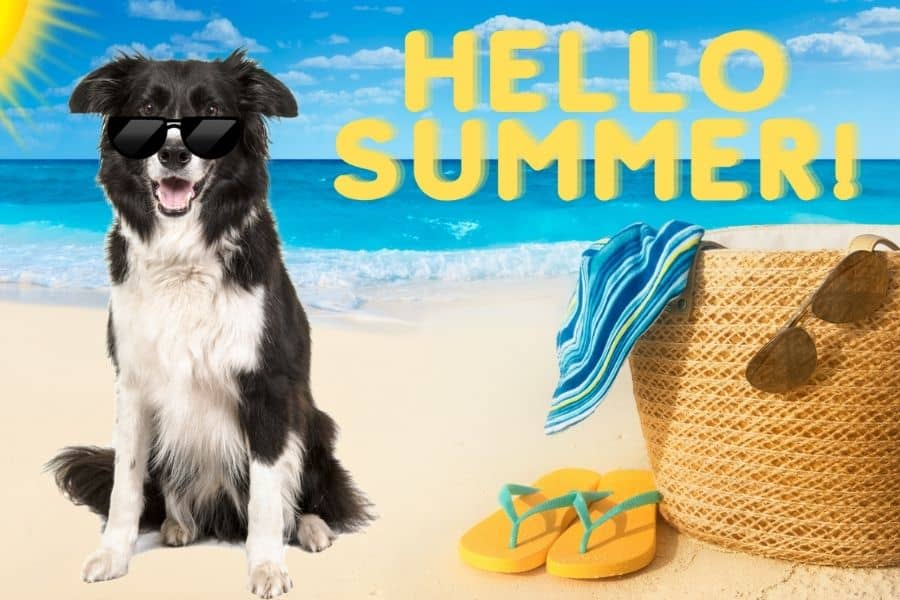 Tips for Walking Your Dog During Summer